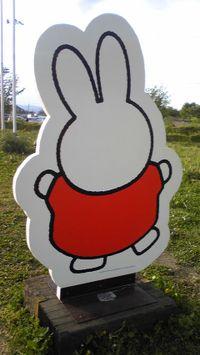 Miffy6